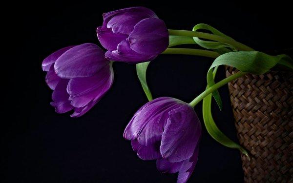 Belles tulipes
