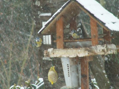 Les oiseaux et l'hiver