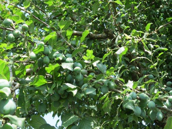 Abondance de fruits
