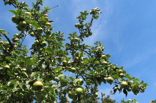 2018 l'année de la pomme
