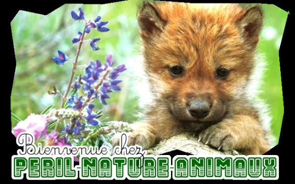 Bienvenue sur Péril-Nature-Animaux !