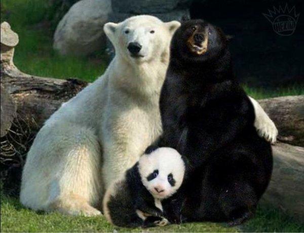 Un belle famille d'ours
