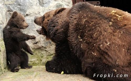 Un ourson qui se fait gronder