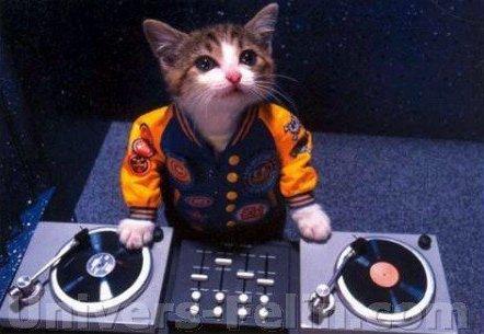Un chat DJ