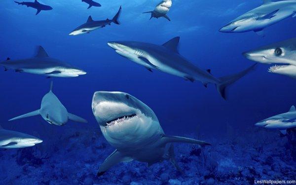 Quelques requins