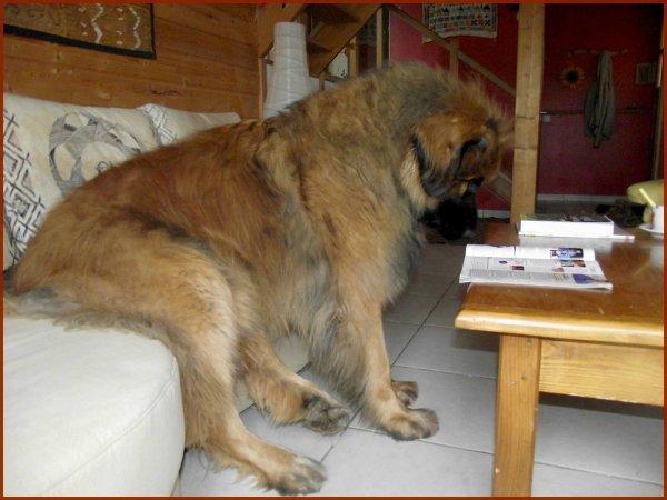 Un chien assis bouquine