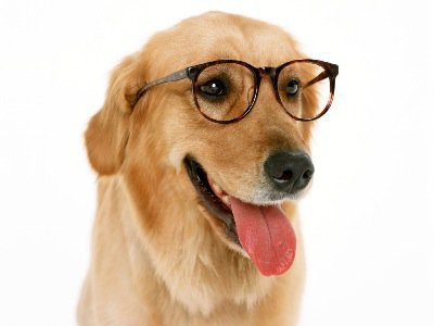 Chien à lunette