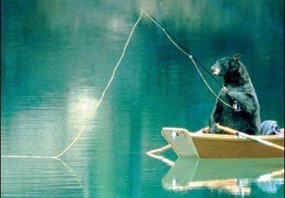Un ours fait une partie de pêche