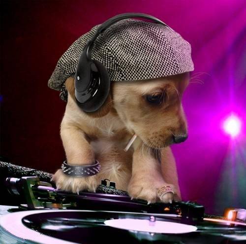 Chien DJ