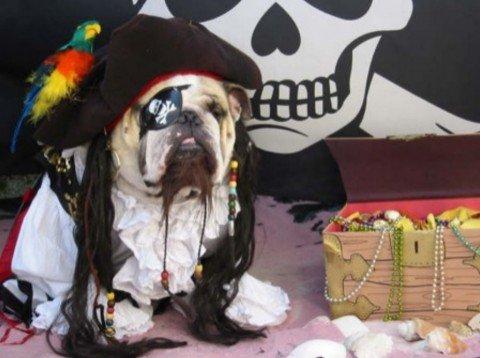 Un chien pirate