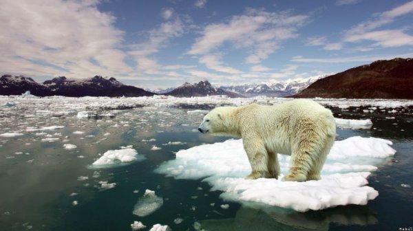 Un ours sur une île de glace