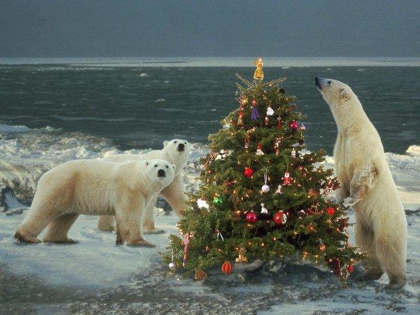 Des ours de Noël