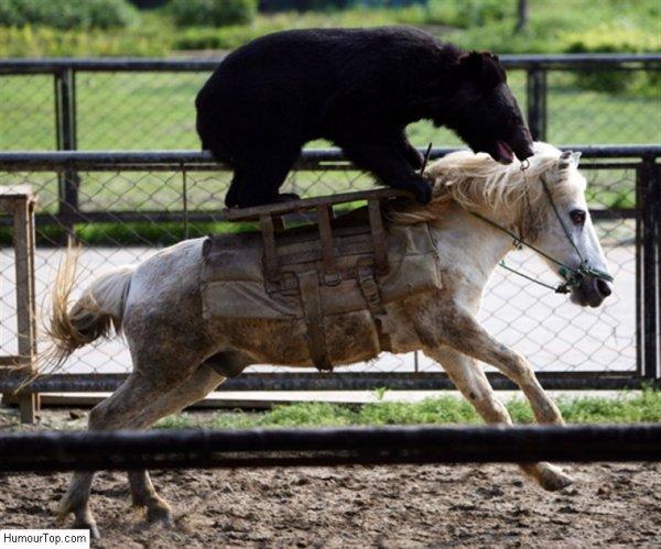 Un ours qui fait de l'équitation