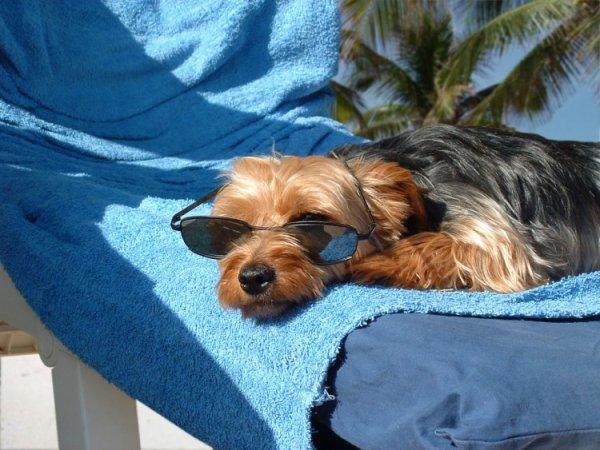 Un chien en vacance