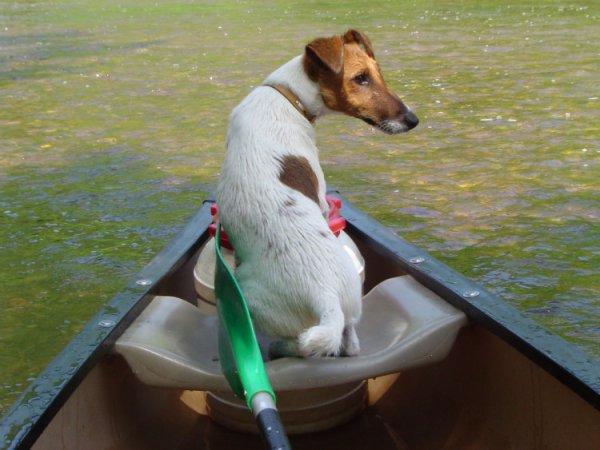 Un chien en barque
