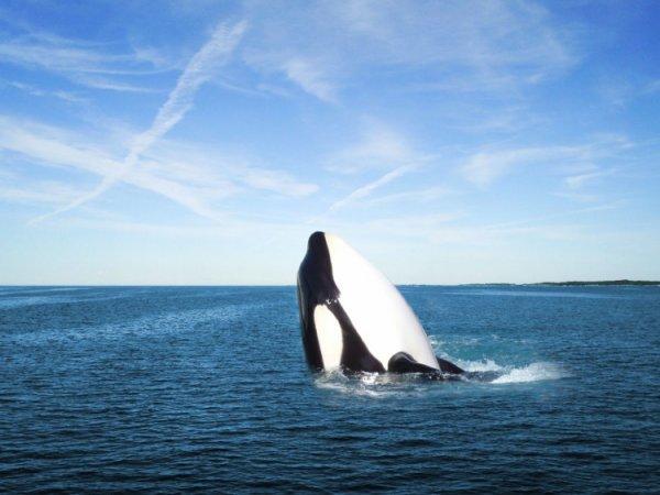 Un orque sympa