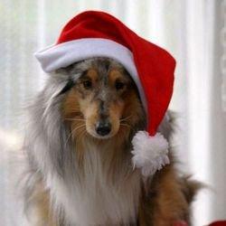 Lassie fête Noël