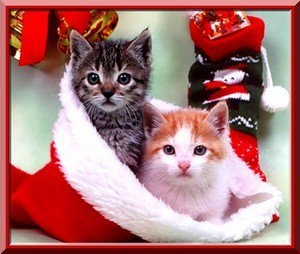 Le Noël des chats