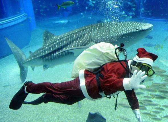 Requin avec le Père Noël