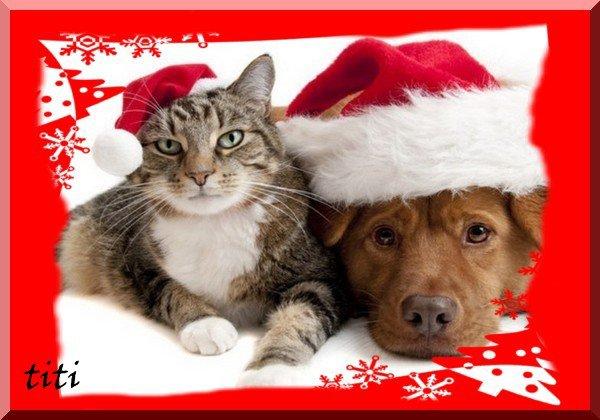 Chien et chat de Noël