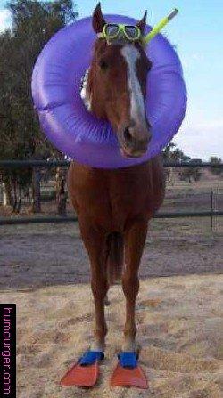 Un cheval prés à se baigner