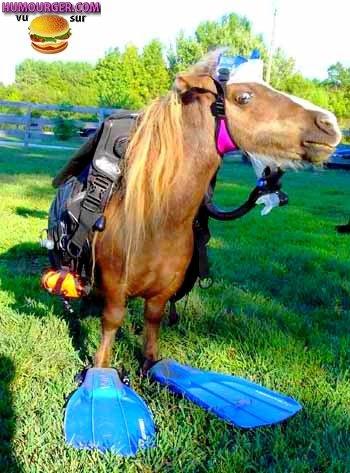Un cheval prés à faire de la plonger