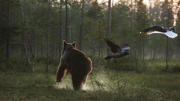 La nature et les animaux