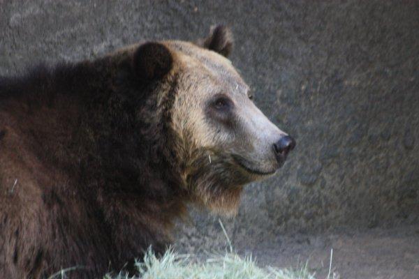 Sa c'est un ours