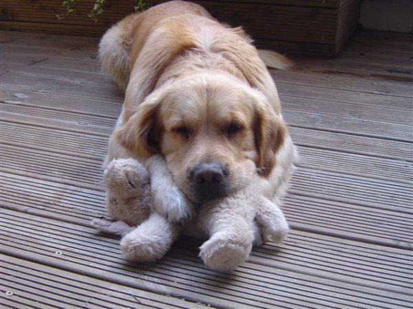 Un chien avec son doudou