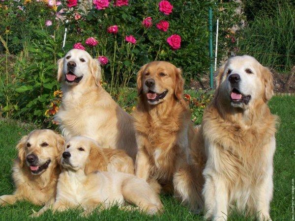 Une belle famille de chien acte 2 - Blog de animal27