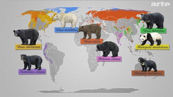Faite votre choix (sondage ursidés : ours et panda)