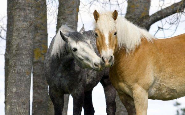 Un couple de cheval tout mignon acte 2