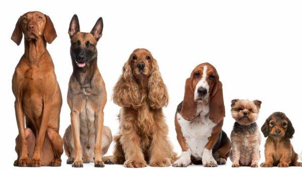 Faite votre choix (sondage chien)
