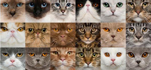 Faite votre choix (sondage chat)
