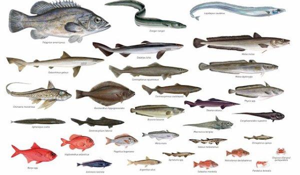 Faite votre choix (sondage poisson)