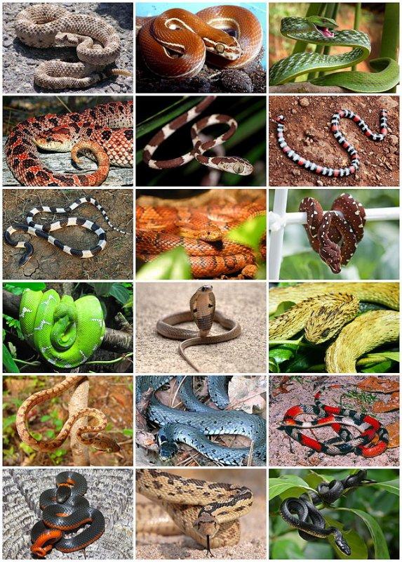 Faite votre choix (sondage serpent)