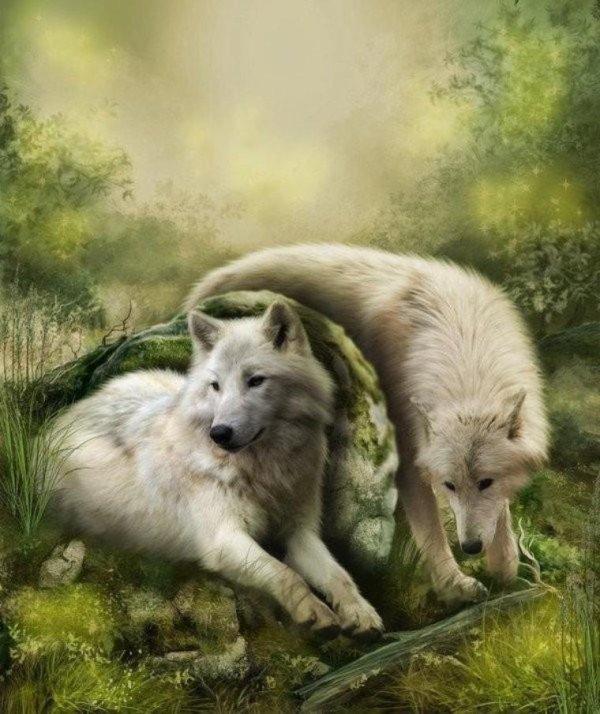 Beau loup cadeau de antoniocosta12