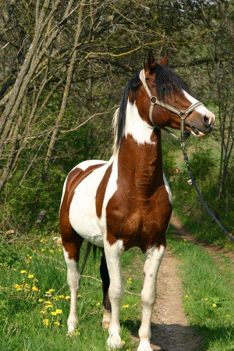 Wouah le beau cheval