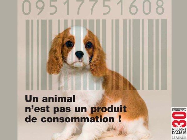 Un animal n'est pas un produit de consommation