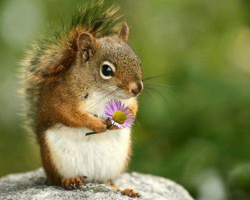 Cette fleure est pour toi