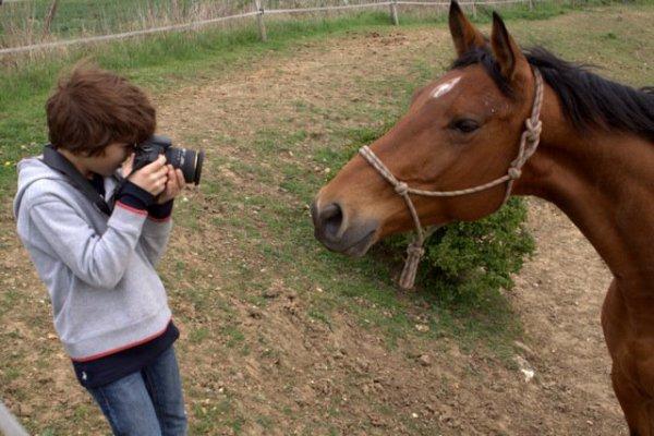Enzo Tomasini photographie un cheval