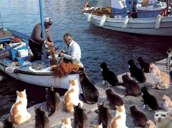 Des chats à bon port