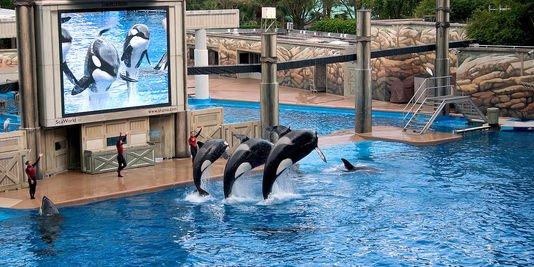 Les orques dans les parc aquatiques (5/22)