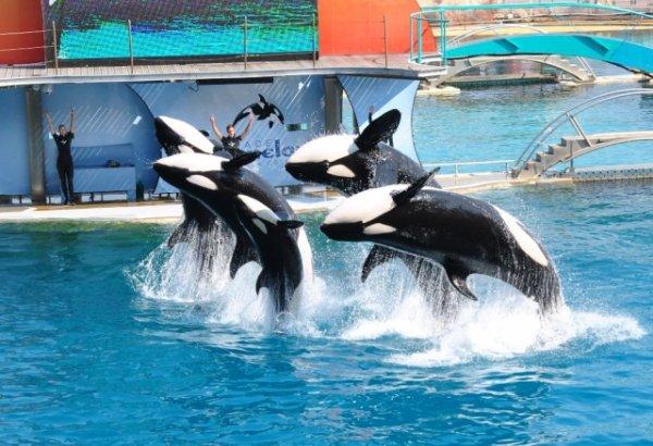 Les orques dans les parc aquatiques (22/22)