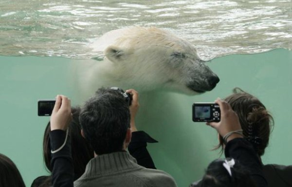 Public et animaux en danger dans les zoos français?