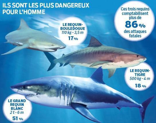 Quel sont les requins les plus dangereux pour l'hommes ?
