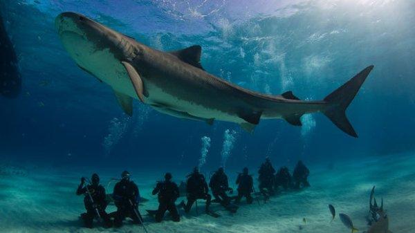 Il est bien long ce requin
