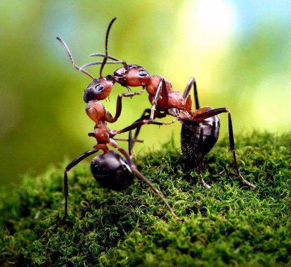 Une bagarre de fourmis