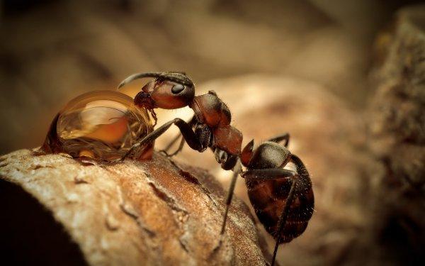 Deux fourmis en vu