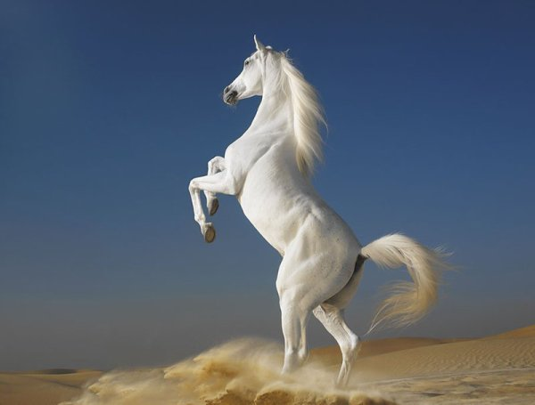 Un magnifique cheval dans le sable